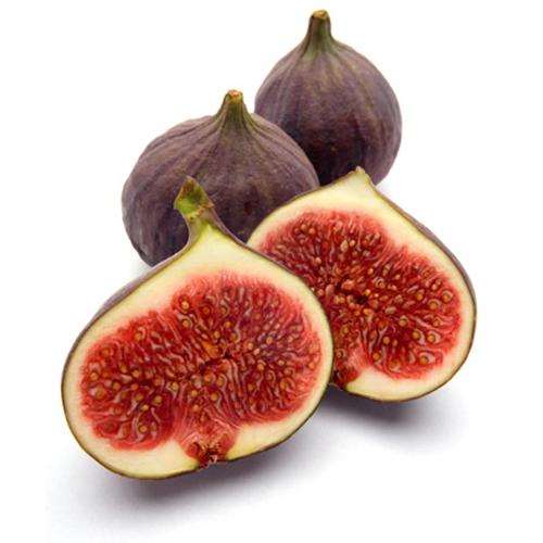 figs sq