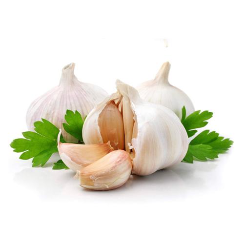 garlic sq