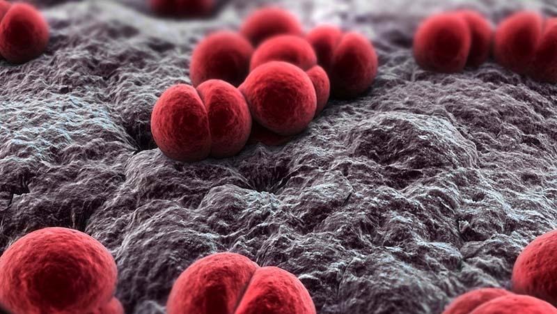 Μηνιγγιτιδοκοκκική νόσος
