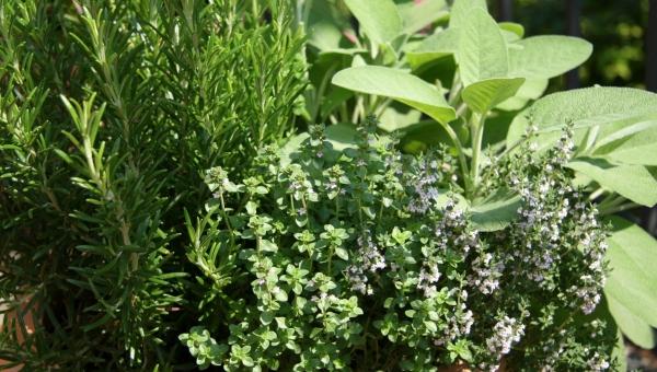 3000 βότανα έχουν αντικαρκινική δράση- διαβάστε ποια