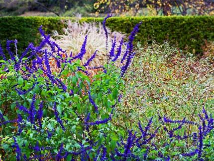 ΚΑΛΥΤΕΡΗ ΖΩΗ: 5 βότανα για καλή υγεία Η φύση έχει όλα τα φάρμακα που χρειαζόμαστε μέσα στα βότανά της