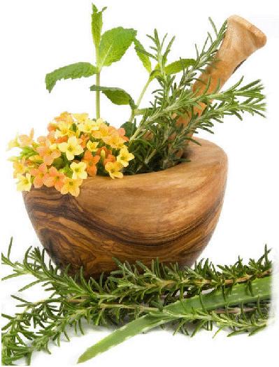 35 βότανα «σύμμαχοι» για καλή υγεία