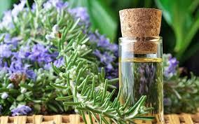 Το άρωμα δεντρολίβανου μπορεί να ενισχύσει τη μνήμη και την υγεία