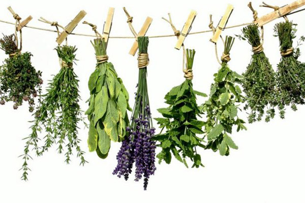 Βότανα που αδυνατίζουν