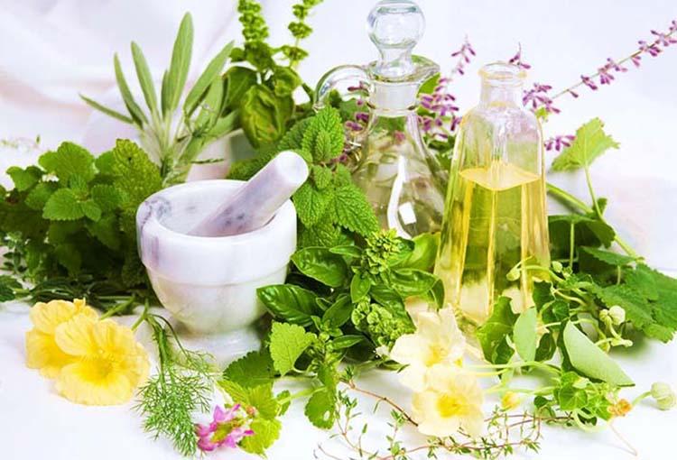 Τα βότανα και οι χρήσεις τους σε ένα ενδιαφέρον βίντεο