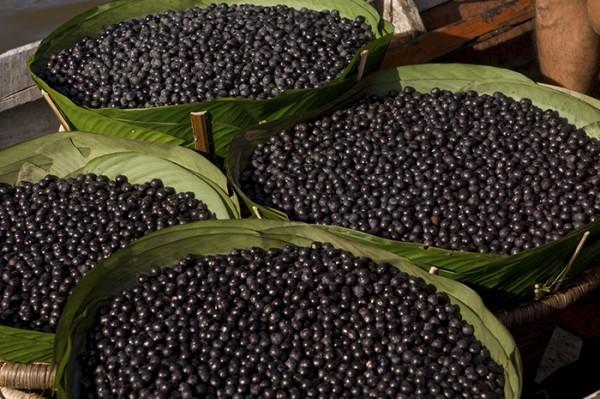 Αcai_berries1