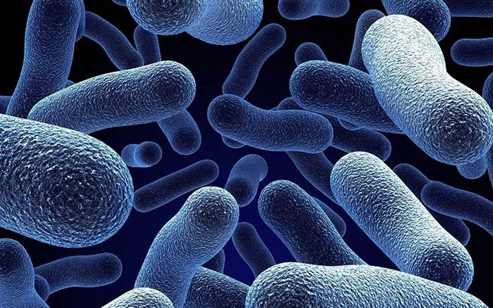 Μπορούν τα <<καλά>> βακτήρια του εντέρου να προστατεύσουν από τον καρκίνο;