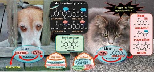 Γατοτροφές με ψάρι προκαλούν υπερθυρεοειδισμό στις γάτες