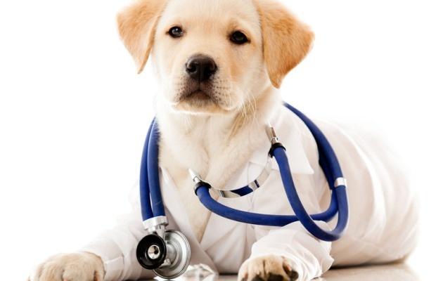 Τα 5 συχνότερα αίτια απώλειας τριχώματος στο σκύλο