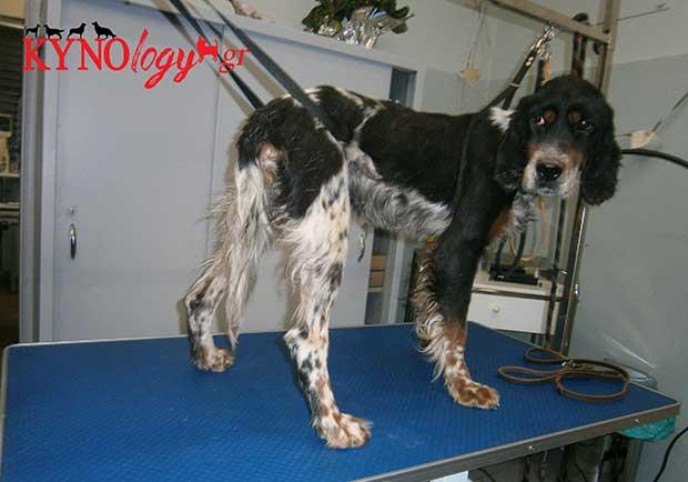 Διάταση και συστροφή του στομάχου στο σκύλο!