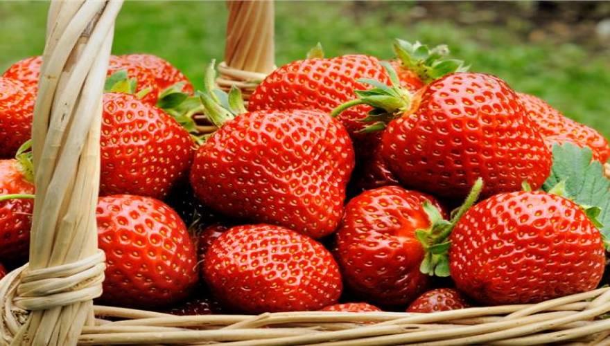 Φράουλες, το ανοιξιάτικο φρούτο με υψηλή διατροφική αξία