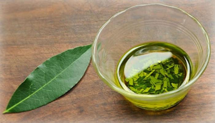 Δάφνη: Το φυτό που γιατρεύει από φλεβίτιδα μέχρι πονοκεφάλους