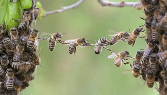 Έρευνα: Πως η υγεία μας συνδέεται με την υγεία των μελισσών