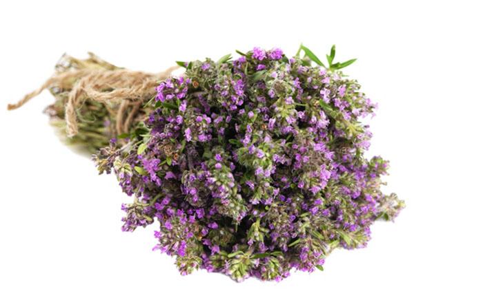 Θυμάρι: Το σωτήριο ελληνικό βότανο