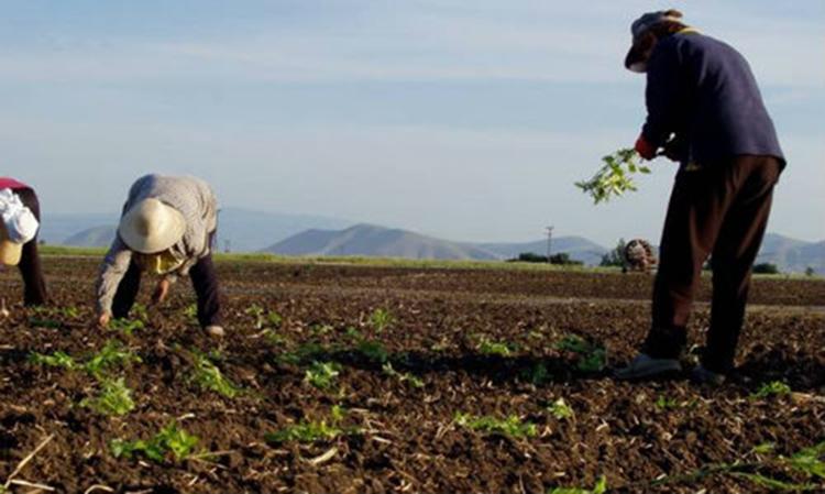 To θαυματουργό ελληνικό φυτό σε λίγο θα εξάγεται στην Κίνα