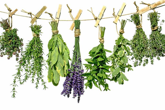 H λίστα με τα πιο οφέλιμα βότανα για τον οργανισμό