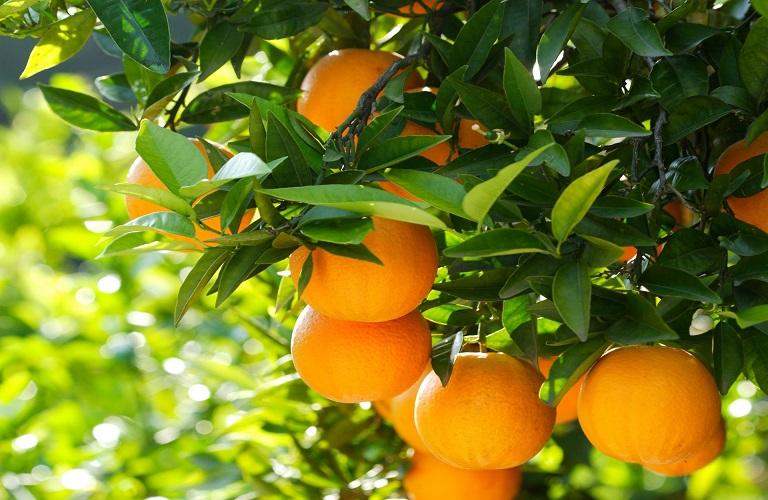 Τα οφέλη του πορτοκαλιού στον οργανισμό μας