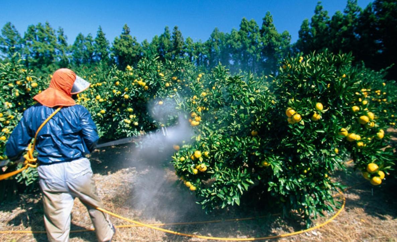 Η ποσότητα φυτομαρμάκων που χρησιμοποιείται στα φρούτα και στα λαχανικά