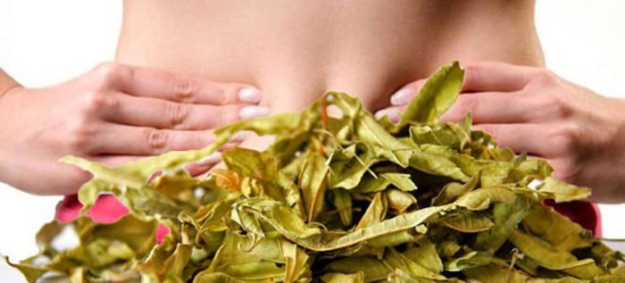 Τα βότανα που μας βοηθάνε να αδυνατίσουμε καθώς μειώνουν την όρεξη