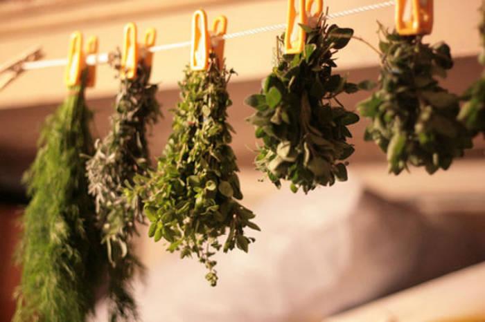Ροδιόλα : Το βότανο που καταπολεμάει την κατάθλιψη